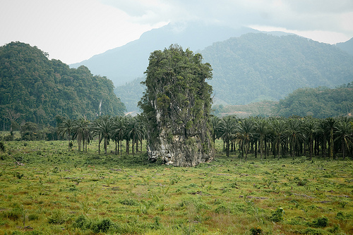 Deforestation oil palm Malaysia